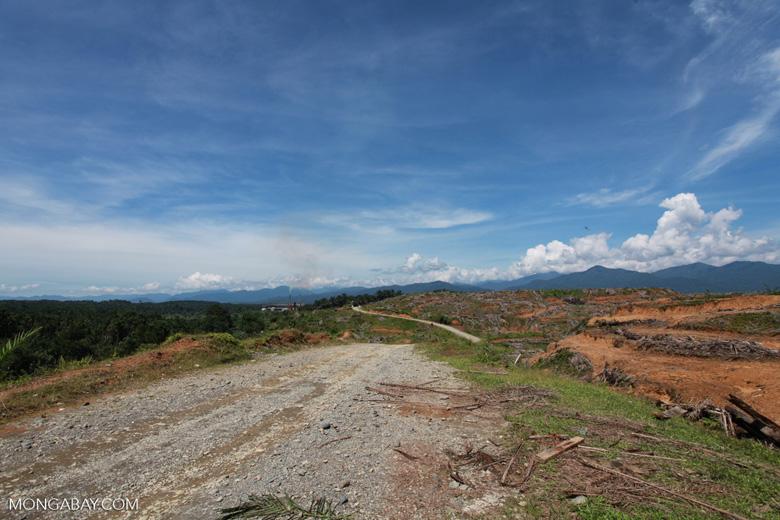 Oil palm plantation near Gunung Leuser National Park [sumatra_0802]