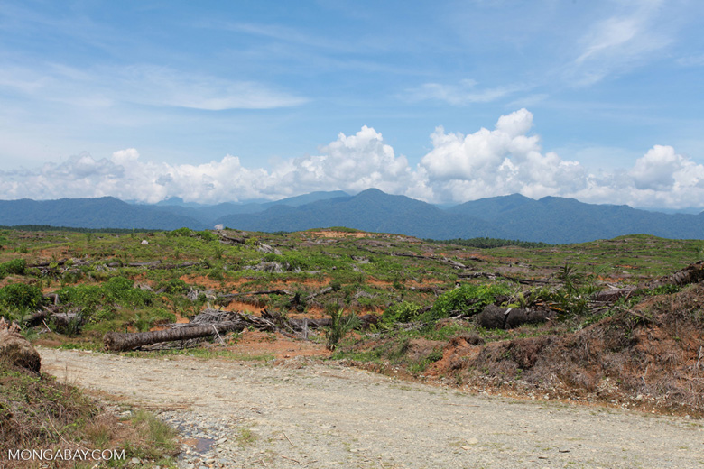 Oil palm plantation near Gunung Leuser National Park [sumatra_0809]