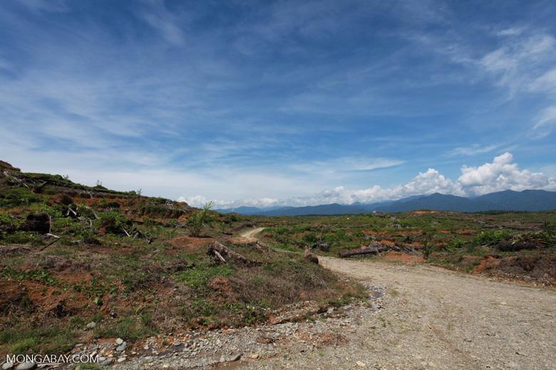 Oil palm plantation near Gunung Leuser National Park [sumatra_0812]