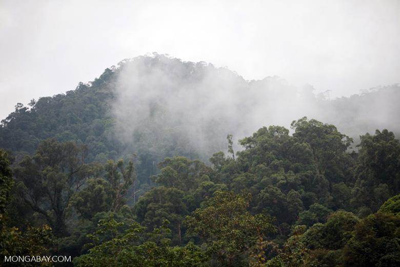 Rainforest near Tangkahan [sumatra_0995]