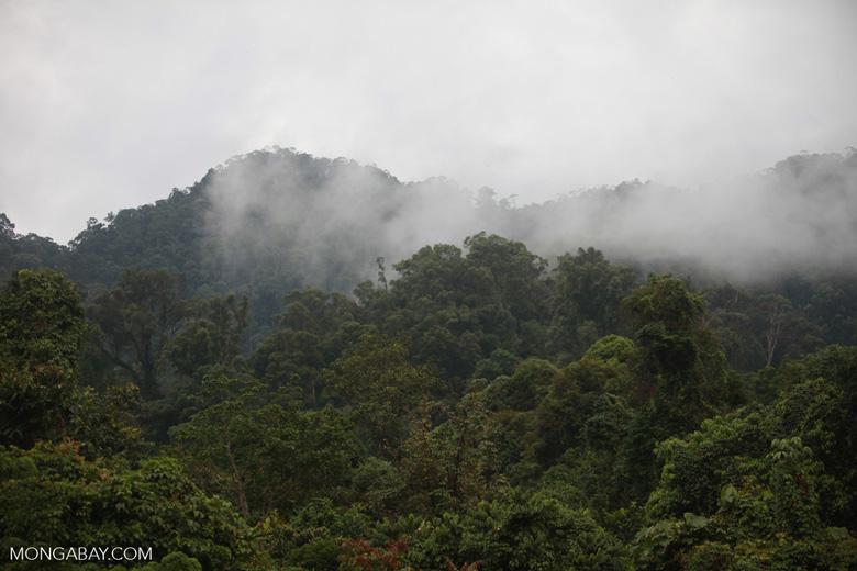 Rainforest near Tangkahan [sumatra_0997]