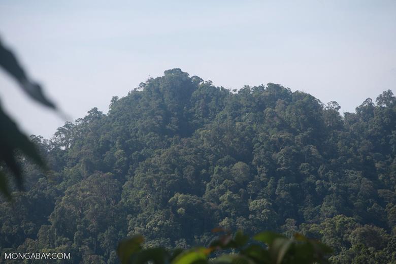 Rainforest near Tangkahan [sumatra_1010]