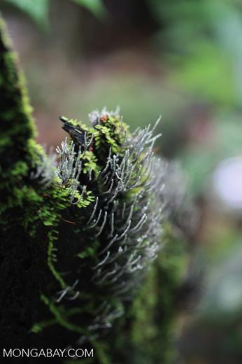 Fungi emerging from a rainforest tree stump [sumatra_1037]