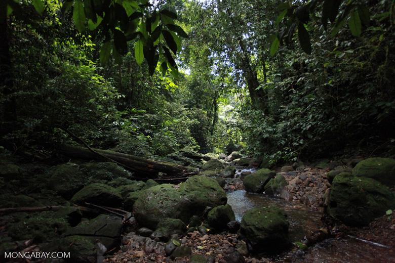 Gunung Leuser rain forest [sumatra_1071]