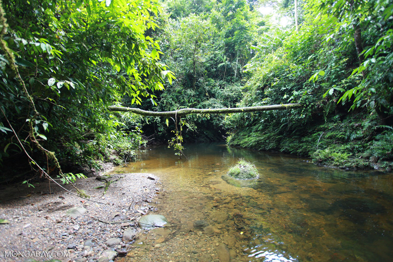 Rainforest creek in Gunung Leuser [sumatra_1073]