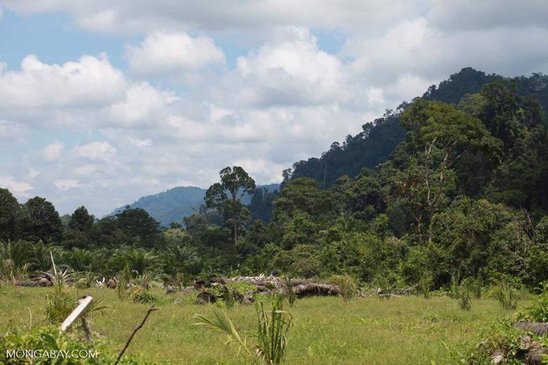 Oil palm plantation adjacent to Gunung Leuser National Park
