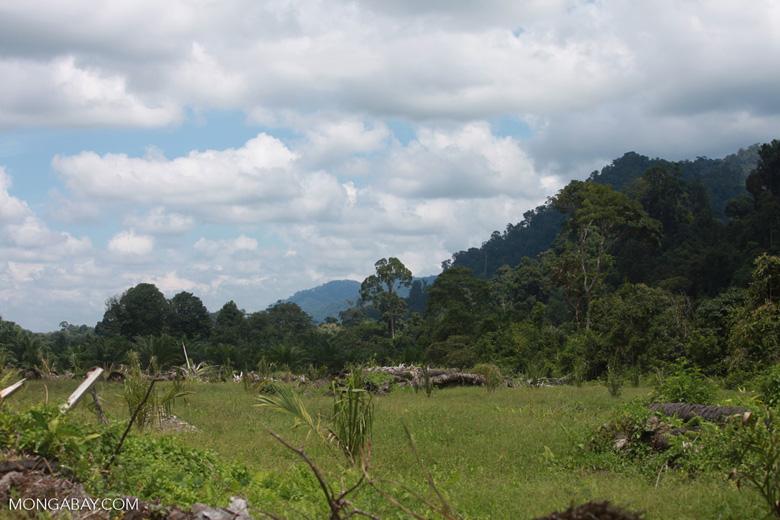Oil palm plantation adjacent to Gunung Leuser National Park [sumatra_1125]