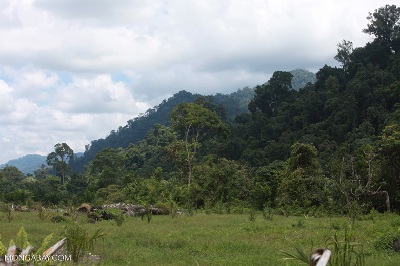 Oil palm plantation adjacent to Gunung Leuser National Park [sumatra_1126]