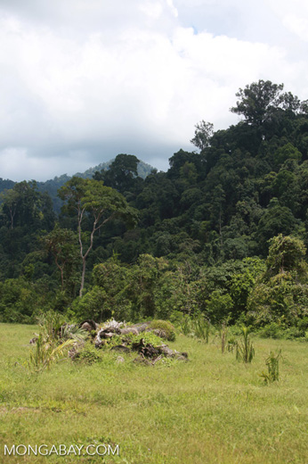 Oil palm plantation adjacent to Gunung Leuser National Park [sumatra_1133]
