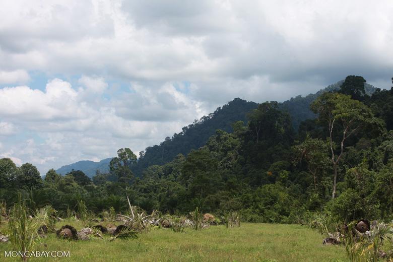 Oil palm plantation adjacent to Gunung Leuser National Park [sumatra_1134]