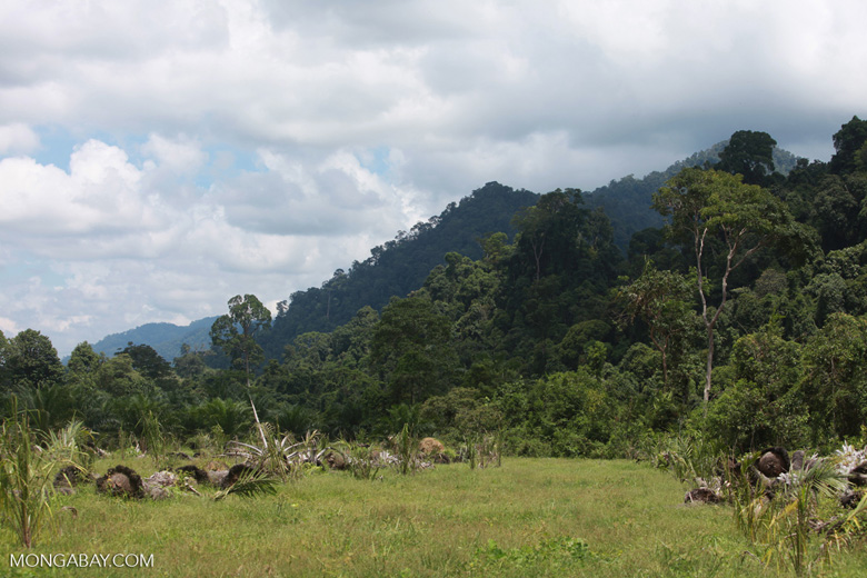 Oil palm plantation adjacent to Gunung Leuser National Park [sumatra_1136]