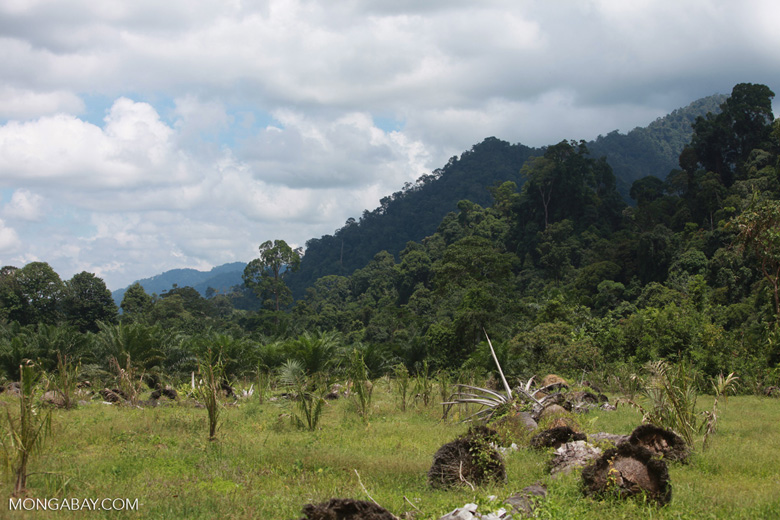 Oil palm plantation adjacent to Gunung Leuser National Park [sumatra_1138]