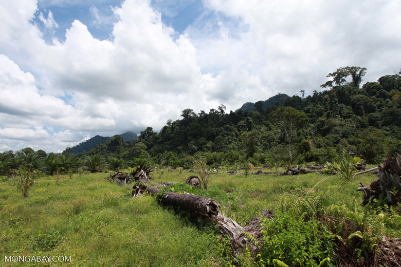 Oil palm plantation adjacent to Gunung Leuser National Park [sumatra_1143]