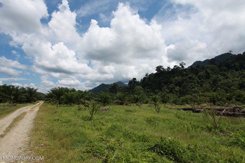 Oil palm plantation adjacent to Gunung Leuser National Park [sumatra_1146]
