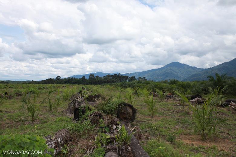 Oil palm plantation on former rainforest land [sumatra_1415]