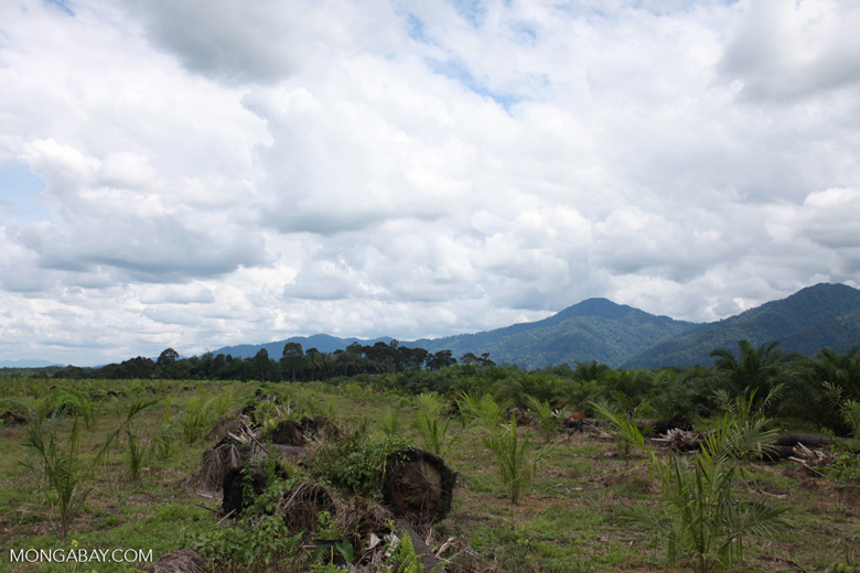 Oil palm plantation on former rainforest land [sumatra_1418]