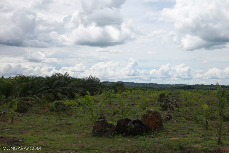 Oil palm plantation on former rainforest land [sumatra_1422]
