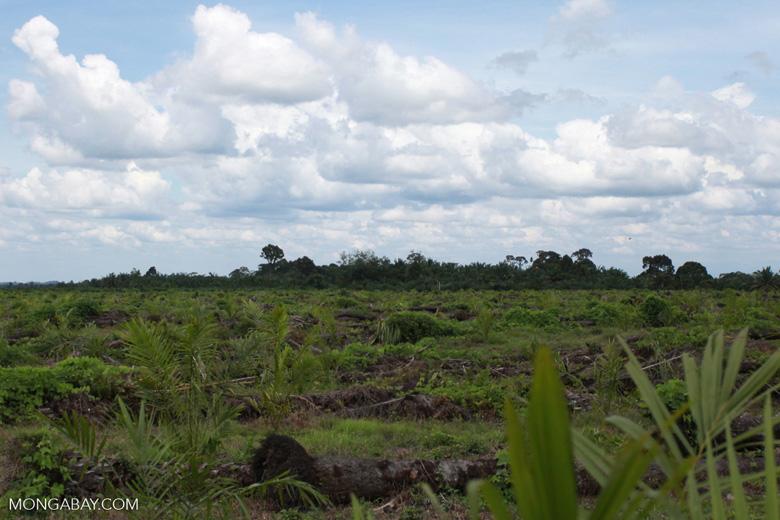 Oil palm plantation on former rainforest land [sumatra_1423]