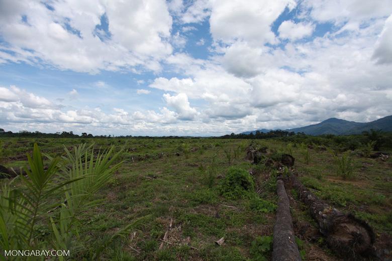 Oil palm plantation on former rainforest land [sumatra_1424]