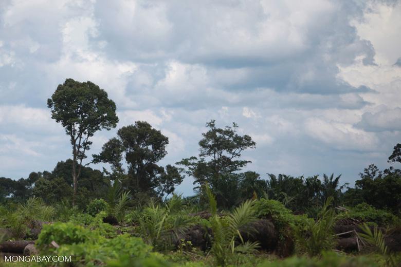 Oil palm plantation on former rainforest land [sumatra_1427]