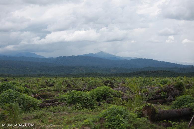 Oil palm plantation and rainforest [sumatra_1449]