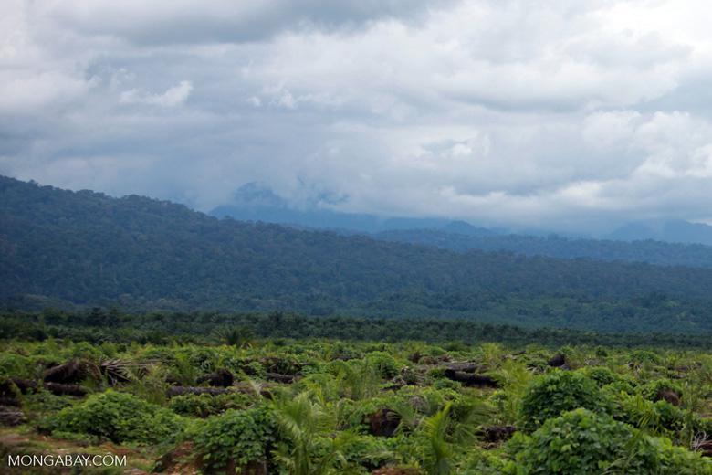 Oil palm plantation and rainforest [sumatra_1450]