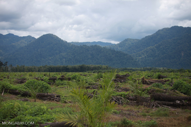 Oil palm plantation and rainforest [sumatra_1452]