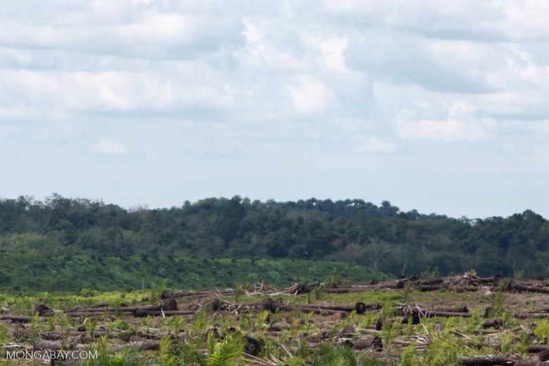 Oil palm plantation and rainforest [sumatra_1456]