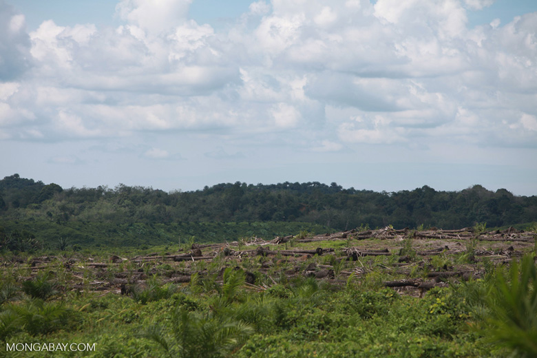 Oil palm plantation and rainforest [sumatra_1460]