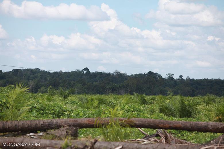Oil palm plantation and rainforest [sumatra_1462]