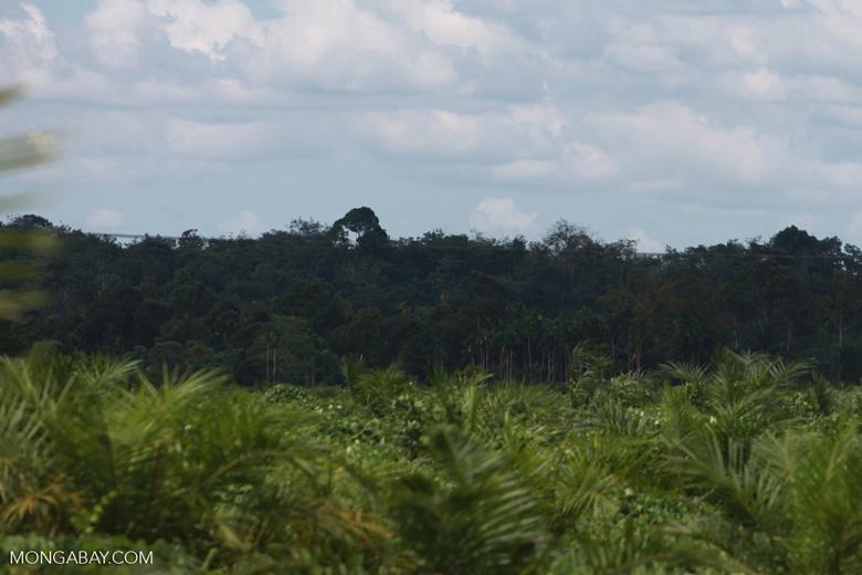 Oil palm plantation and rainforest [sumatra_1463]
