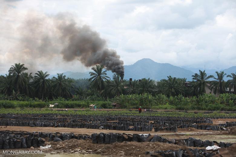 Oil palm nursery and processing facility [sumatra_1466]