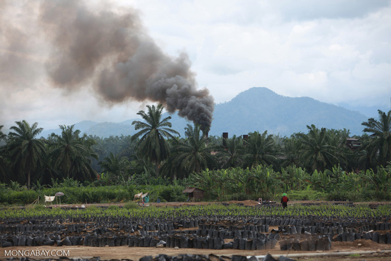 Oil palm nursery and processing facility