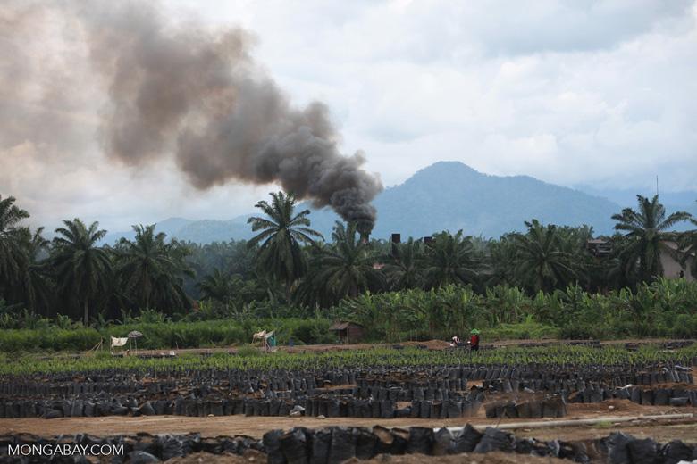 Oil palm nursery and processing facility [sumatra_1471]