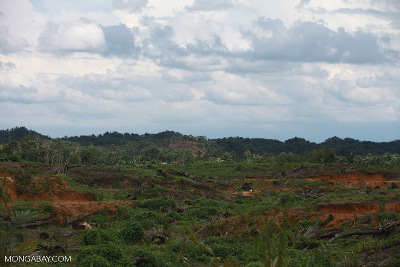 Hillside clearing for oil palm [sumatra_1474]