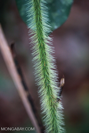 Spines on a plant stem