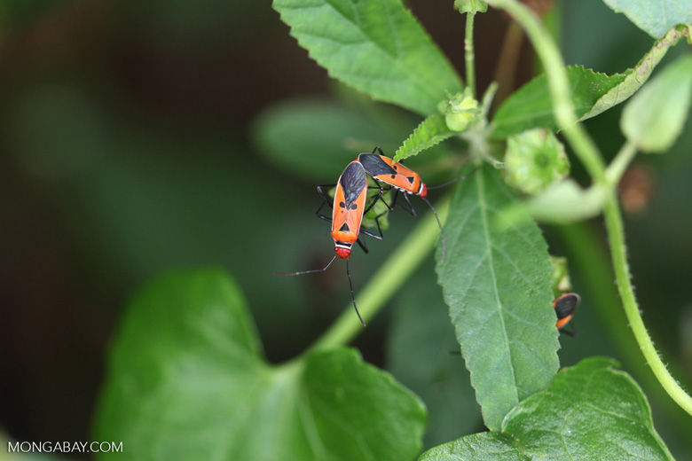 Orange, red, and black insects