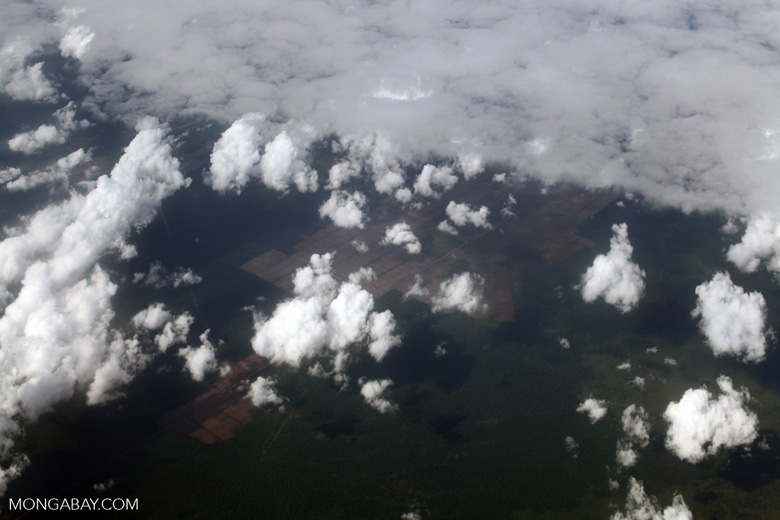 Aerial view of an oil palm plantations under clouds