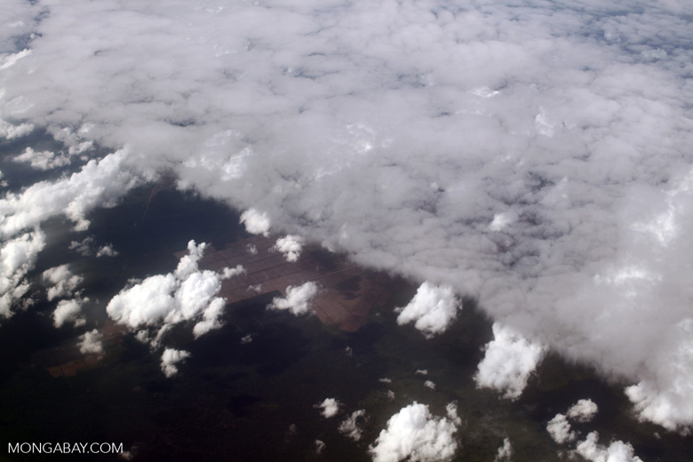 New oil palm plantations under clouds