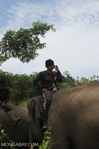 Mahout speaking on his cell phone from atop an elephant