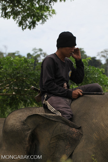 Mahout making a phone call from atop an elephant