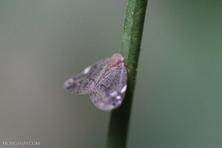 Gray insect
