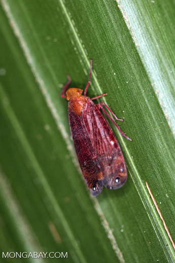 Red and orange insect