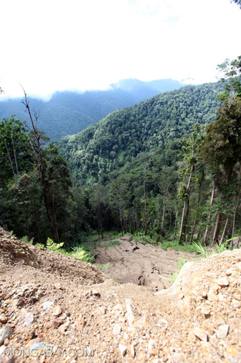 Landslide or washout in the Arfak mountains rainforest
