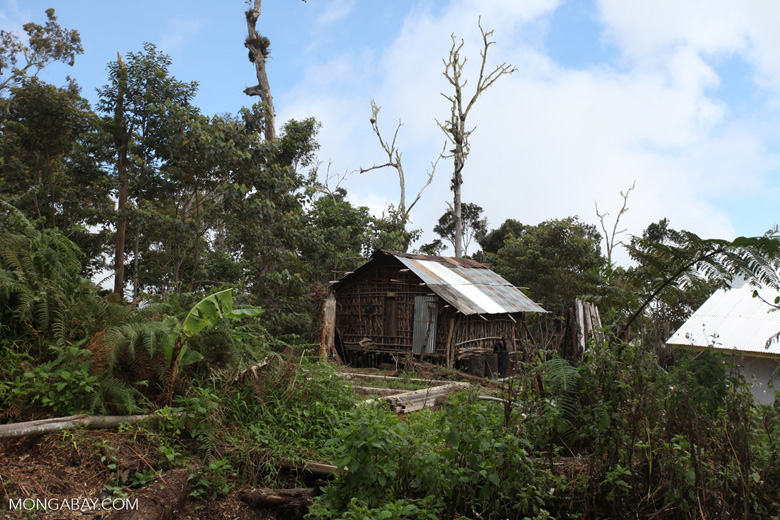 Traditional Mouley hut in the Arfak highlands outside of Manokrawi