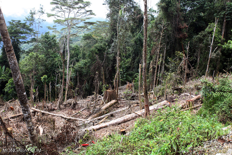 Deforestation in the Arfak mountains
