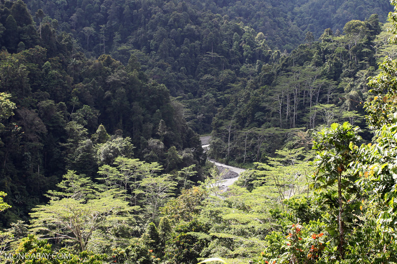 Rainforest in the Arfak Mountains