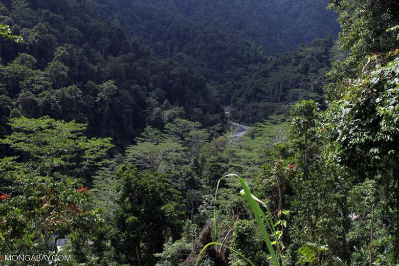 Rainforest in the Arfak Mountains
