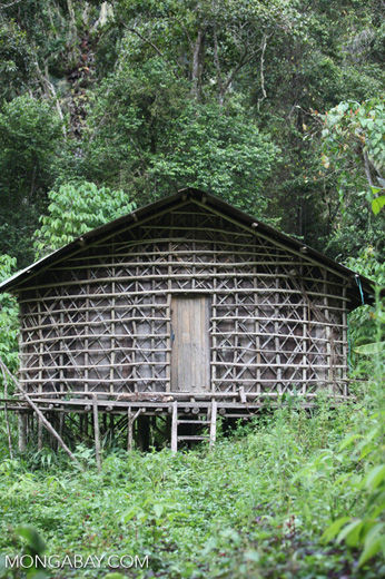 Traditional hut in the Arfak mountains