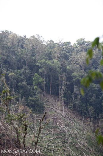 Deforestation in the Arfak mountains